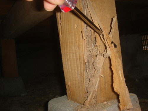 床下の床束 ヤマトシロアリによる被害