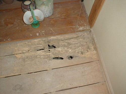 和室のタタミ下地板 ヤマトシロアリによる被害
